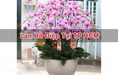 Lan Hồ Điệp Tại TP HCM