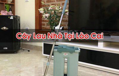 Cây Lau Nhà Tại Lào Cai